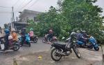 Pohon Tumbang Tutup Jalan HM Arsyad Sampit