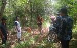 Orangutan Rusak Tanaman Warga Desa Jemaras dan Jalan Lingkar Utara