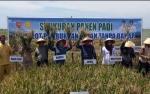 Kunjungi Wilayah Pesisir, Bupati Kobar Luncurkan Layanan Angkutan Perintis dan Ikuti Syukuran Panen Padi