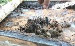 Ini Tips Beternak Lebah Madu Kelulut