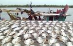 Pelabuhan Perikanan Kuala Pembuang Kelola Unit Pengolahan Ikan
