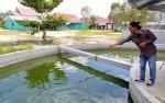 60 Persen Kebutuhan Ikan Jelawat di Kotim Dipasok dari Luar Daerah
