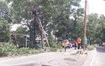 Antisipasi Cuaca Ekstrem, Tim Terpadu Tumbangkan Puluhan Pohon