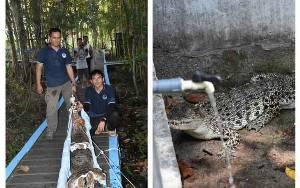 BKSDA Kalteng Evakuasi Satwa Dilindungi dari Wisata Rawen