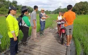 Kepala Dinas Pertanian Tinjau Kondisi Sawah di Desa Ramania Pasca Banjir