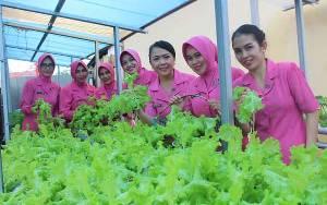 Kebun Bhayangkari Polres Seruyan Panen Selada