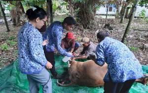 Dinas Peternakan Kobar Imbau agar Peternak Jaga Kesehatan Hewan