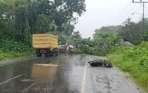 ASN Dinas Perikanan Pulang Pisau Tertimpa Pohon Tumbang Saat Berkendara