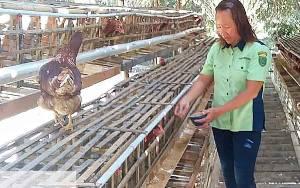 Kepala Dinas Pertanian Barito Timur Minta Penyuluh Terus Dampingi Petani