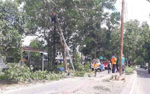 DLH Kobar Ajak Masyarakat Jaga dan Sayangi Pohon