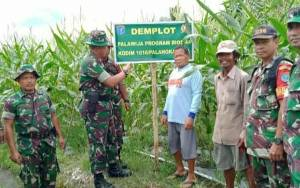 Danramil Pahandut Bersama Babinsa Cek Hasil Bios 44 di Kelompok Tani Wilayah Binaan