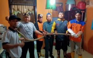 Ular Kobra 3 Meter Muncul di Kamar Mandi Rumah