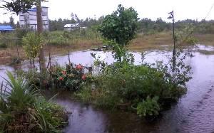 Hujan Deras Mengguyur Kasongan, Waspada Banjir Mengintai