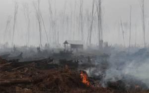 BNPB: Kebakaran Hutan Februari Bertambah di Riau dan Aceh