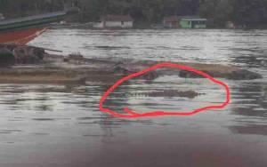 Buaya Diduga Muncul di Sungai Beriwit Gegerkan Masyarakat