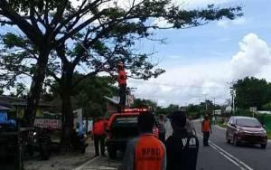 BPBD Palangka Raya kembali Potong Pohon Rawan Tumbang di Jalan