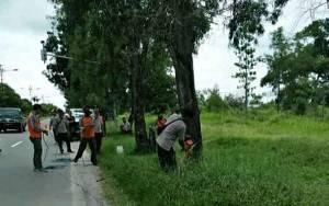 Anggota BPBD Palangka Raya Potong Pohon Tua Rawan Tumbang ke Jalan Raya