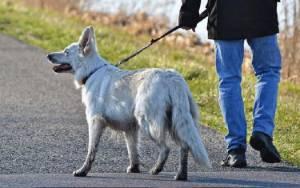 Apakah Anjing Bisa Terinfeksi COVID-19?