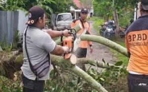 BPBD Palangka Raya Potong Pohon Rawan Tumbang ke Jalan