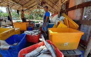 Nelayan Pantai Lunci Tetap Melaut di Tengah Wabah Covid-19