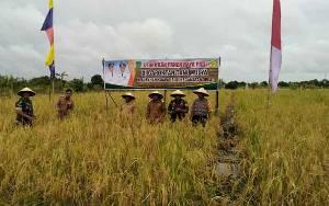 Camat Diharapkan Pantau Hasil Panen Padi Petani Tidak Dijual Keluar Daerah Selama Wabah Covid-19