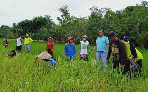 Kepala Dinas Pertanian Barito Timur Minta Petani Serentak Berantas Hama