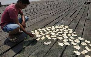 Akibat Corona Gelembung Ikan Tak Bisa Dikirim Keluar Daerah