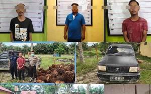 Curi 3,5 Ton Sawit, 3 Warga Pangkalan Lada Dibekuk Polisi