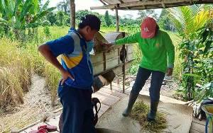 Balai Penyuluh Pertanian Kecamatan Paku Lakukan Pengubinan Padi Bebas Residu