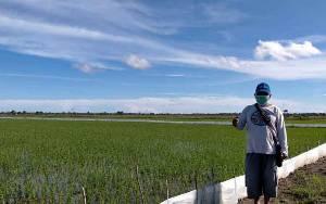 Petani Katingan Kuala Mulai Tanam Padi