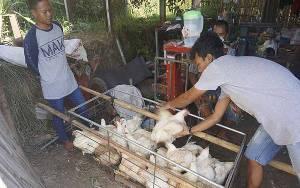DPR Minta Kementerian Pertanian Kaji Ulang Pengadaan Ayam Rp 770 Ribu Per Ekor