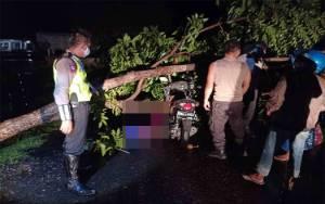 Hujan Lebat, Tabrak Pohon Tumbang, Penjaga Malam Tewas