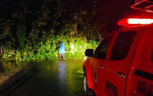 Pohon Tumbang Tutupi Badan Jalan Bikotin Palangka Raya Akibat Hujan dan Angin Kencang