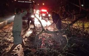 Hujan Desas dan Angin Kencang Sebabkan Sejumlah Pohon Pelingkau Tumbang