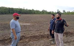 Distan Barito Timur Dukung Petani di Paku Kembangkan Ubi Kayu