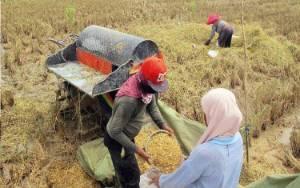 Masa Pandemi, BPS: Kinerja Sektor Pertanian Cemerlang