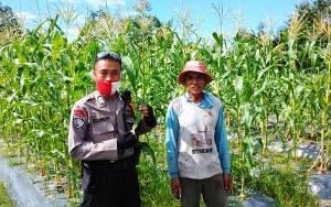 Polresta Palangka Raya Pantau Kondisi Ketahanan Pangan di Petuk Ketimpun
