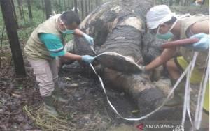 Bikin Pipa Rokok dari Gading Gajah , Warga Garut Ditangkap