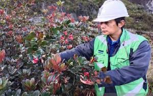 Freeport Temukan Spesies Tumbuhan Baru Papua, Diteliti 35 Tahun