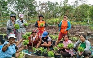 Pemkab Murung Raya Berencana Buka Lahan Pertanian