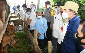 Bupati Barito Utara Apresiasi Keberhasilan Peternakan Sapi di Transbangdep