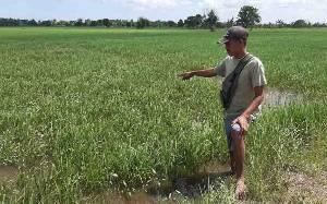 Petani di Katingan Kuala Harapkan Kelangkaan Pupuk Subsidi Tak Berulang