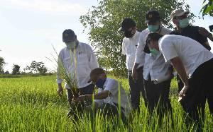 164.000 Hektare Lahan Disiapkan untuk Program Food Estate, 85.000 Hektare Sudah Digarap