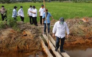 Dikerjakan Keroyokan oleh Sejumlah Kementerian, Pertanian Modern di Kalteng Ditarget Terealisasi dalam 2 Tahun
