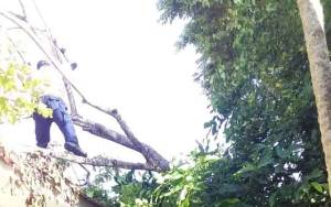 Pohon Tumbang Timpa Atap Kantor Inspektorat Kobar
