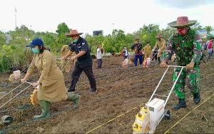 Dukung Sektor Pertanian, Pabung Gunung Mas Ikut Tanam Jagung Hibrida di Kelompok Tani Sejahtera