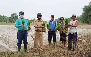 BPP Paku Target Tanam Padi 600 Hektare pada Musim Tanam Asep