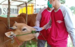 Pasar Hewan Kurban di Tengah Pandemi Covid-19 Harus Kantongi Izin