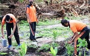 Polresta Palangka Raya Manfaatkan Lahan Kosong Jadi Kebun Buah dan Sayur untuk Dukung Ketahanan Pangan
