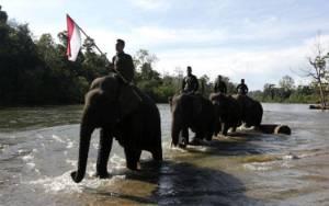 Gajah Sumatera Tak Sekadar Untuk Wisata, Tapi Penting Bagi Dunia